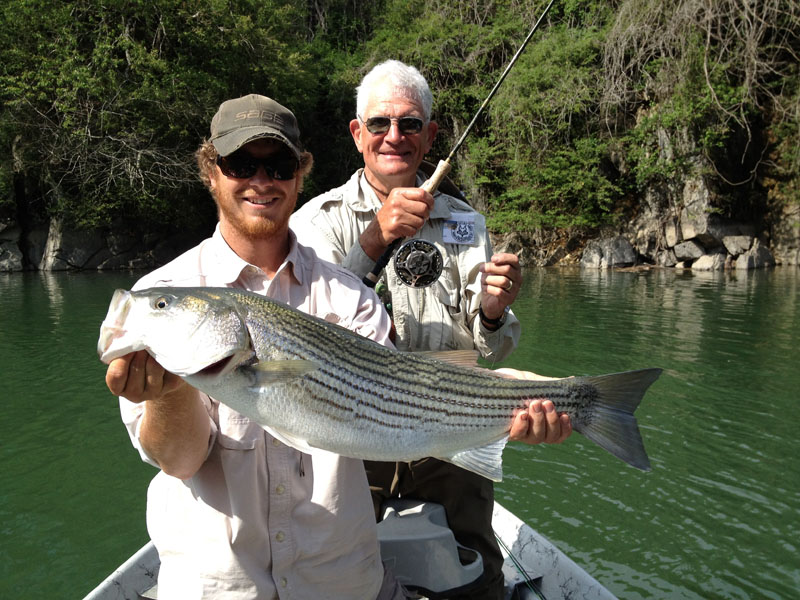 a big striped bass