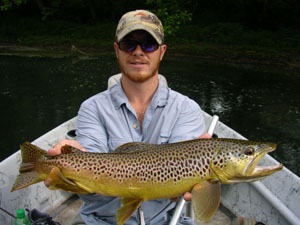A brown trout on the South Holston River