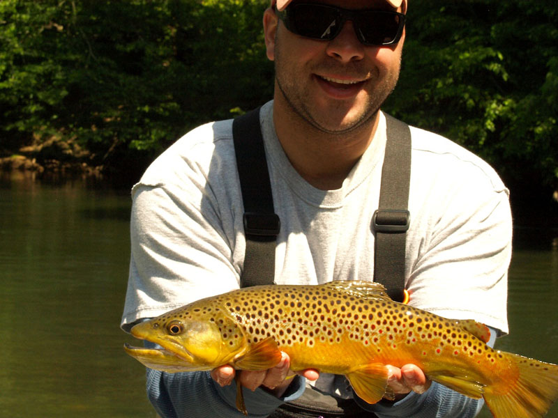 a South Holston River brown trout